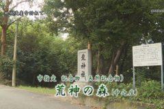 地域遺産:荒神の森