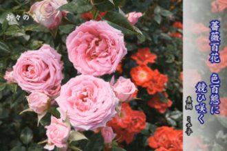 折々のうた「俳句 薔薇」