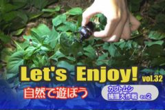 Let's enjoy! vol.32「カブトムシ捕獲大作戦その2」
