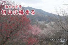 街かど百景:切山に梅香る