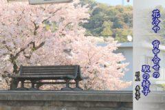 折々のうた「俳句 桜」