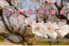 街かど百景:すすきヶ原入野公園 梅
