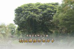 地域遺産:村山神社のホルト