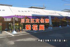美術館:川之江文化祭 菊花展