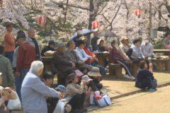 市内各地域で桜まつり開催