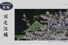 桜百景2019 夜桜