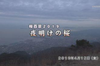 桜百景2019 夜明けの桜