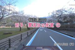 桜百景2019 別子・翠波はな街道②