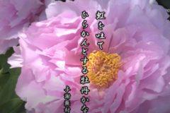 花ごよみ 牡丹【与謝蕪村(よさぶそん)】