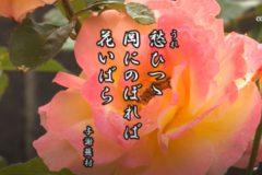 花ごよみ 薔薇【与謝蕪村(よさぶそん)】