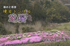 街かど百景:境目トンネル 芝桜