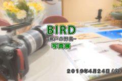 美術館:BIRD-瀬戸の野鳥-写真展