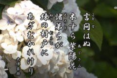 花ごよみ 紫陽花【大伴家持(おおとものやかもち)】