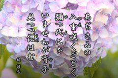 花ごよみ 紫陽花②【橘諸兄(たちばなのもろえ)】