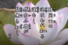 花ごよみ 蓮【婦人】