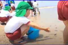 わんぱく通信vol.36【寒川保育園の園児がヒラメの稚魚を放流・新宮小中学校林業教室・仕事見学ツアー】