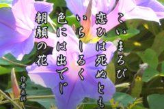 花ごよみ 朝顔【作者未詳】