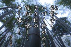 花ごよみ 竹【作者未詳】
