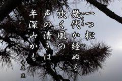 花ごよみ 松【市原王(いちはらおう)】