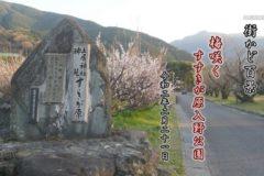 街かど:梅咲く すすきが原入野公園