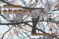 2020 桜百景4月4日