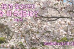 2020年 桜百景4月6日ver3