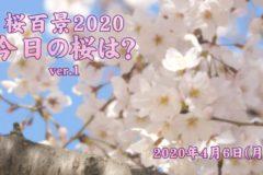 2020年 桜百景4月6日ver1