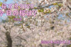 2020年 桜百景4月6日ver2