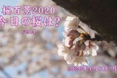 2020年 桜百景4月6日ver4