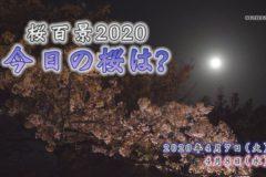 桜百景 今日の桜は? 4月7日・4月8日