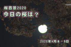 桜百景2020 4月8・9日