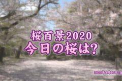 2020年桜百景 4月10日