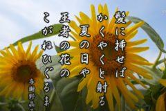 花ごよみ ひまわり【与謝野晶子】