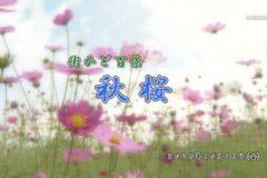 街かど:秋桜