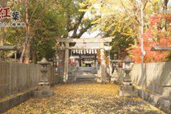 川之江八幡神社 紅葉