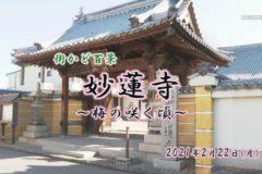 街かど:妙蓮寺~梅の咲く頃~