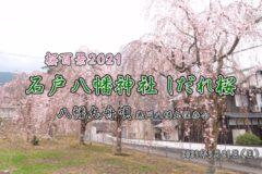 桜百景2021 石戸八幡神社しだれ桜 八幡丸舟唄