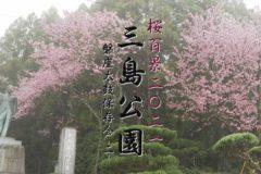 桜百景2021 三島公園-磐座太鼓保存会②-
