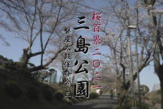 桜百景2021 三島公園-磐座太鼓保存会③-
