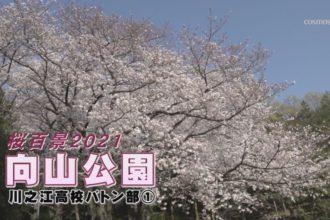 桜百景2021 向山公園-川之江高校バトン部①-