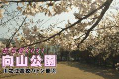 桜百景2021 向山公園-川之江高校バトン部②-