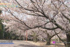 桜百景2021 今日の桜~3月31日編~