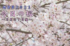 桜百景2021今日の桜3月27日編