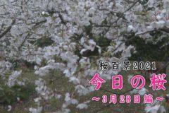 桜百景2021今日の桜3月28日編