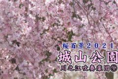 桜百景 城山公園 川之江吹奏楽団④