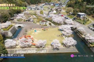 桜百景2021 今日の桜~4月1日編~