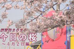 桜百景2021 今日の桜~4月2日編~