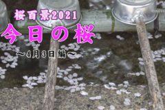 桜百景2021 今日の桜~4月3日編~