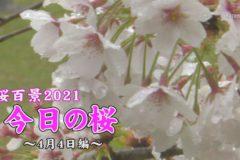 桜百景2021 今日の桜~4月4日編~