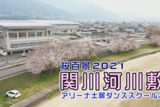 桜百景 関川河川敷 アリーナ土居ダンススクール②